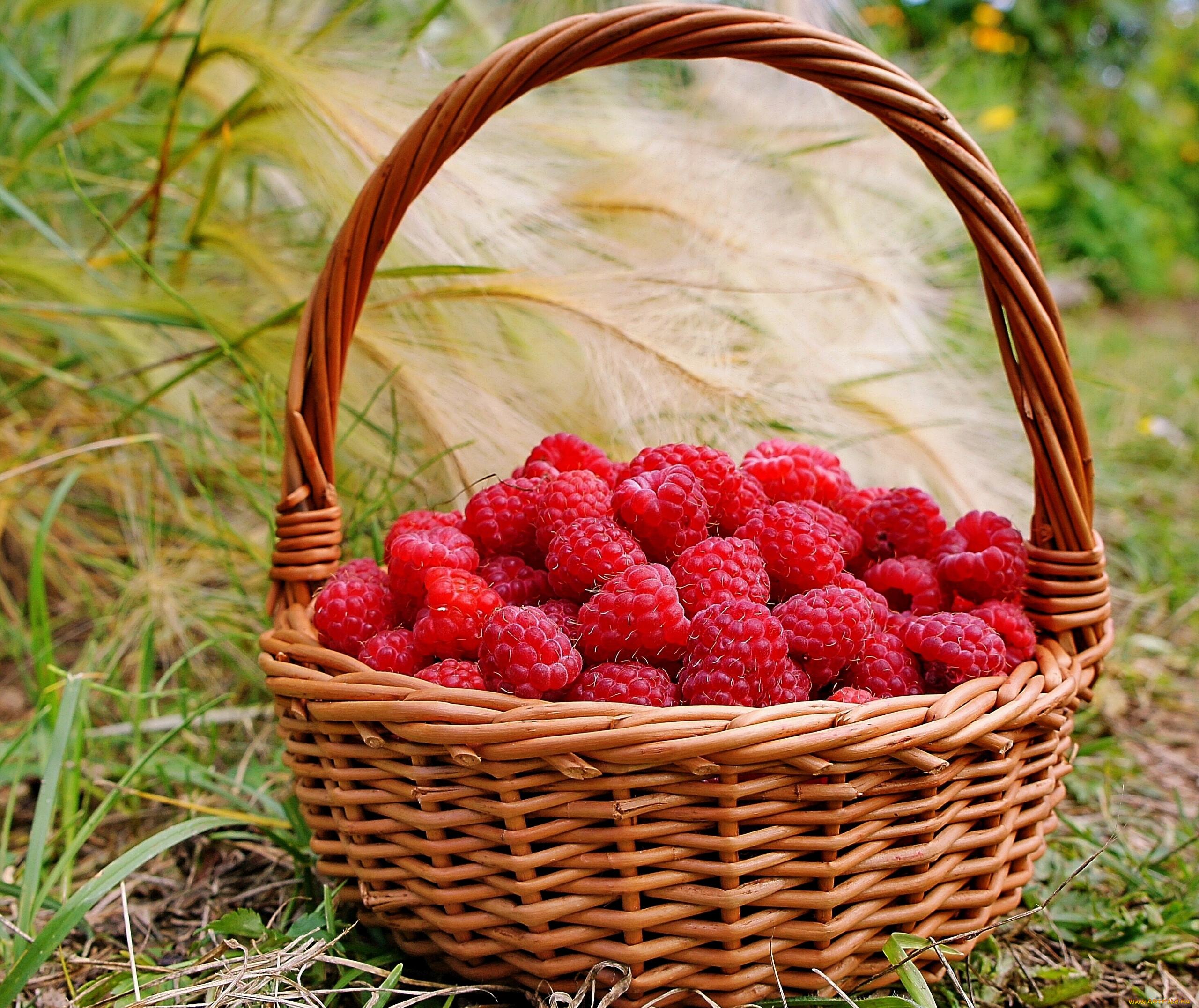 стал скрывать поздравления для ягоды способ получить